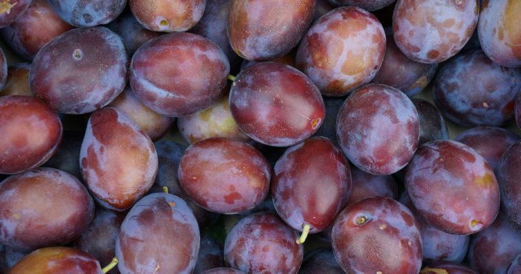 Ersinger Frühzwetschke (Prunus domestica)